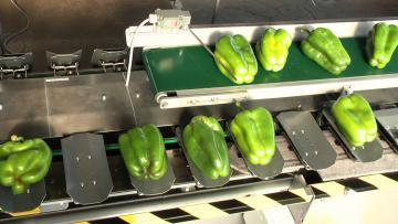 Alimentation  manuelle + tapis d'amené des produits devant l'opérateur
