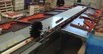 Calibfruit 5m50 - Abricot