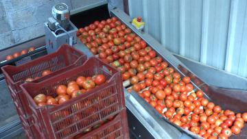 Elévateur à rouleau pour tomate