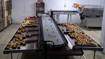 Calibfruit 5m50 - Pomme