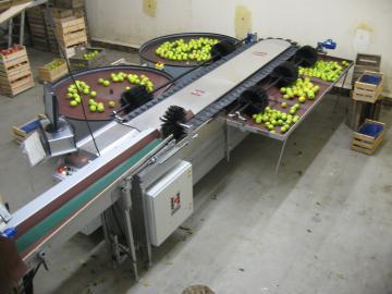 Calibfruit 4m - Pomme