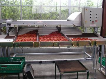 Calibreuse tomate cerise