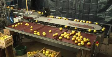 Calibfruit 3m - Pomme