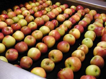 Pommes brossées